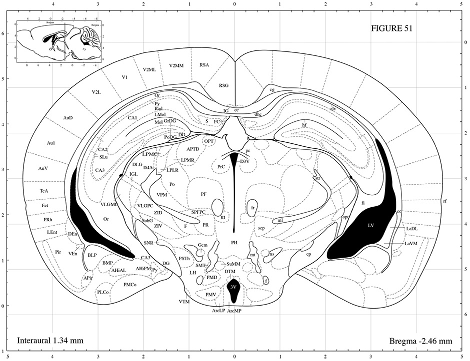 Mouse brain atlas ccuart Image collections