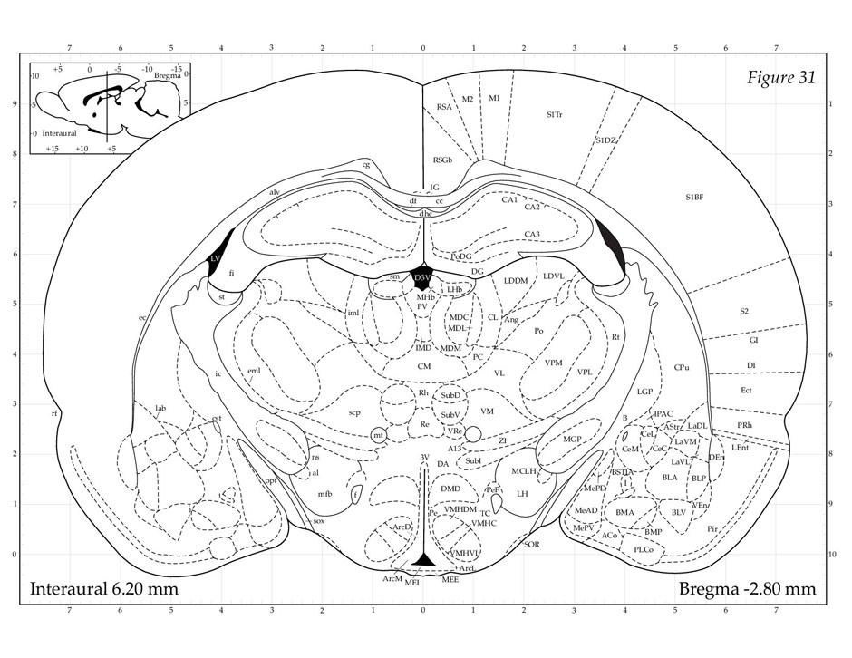 Mouse Anatomy Atlas | Olivero