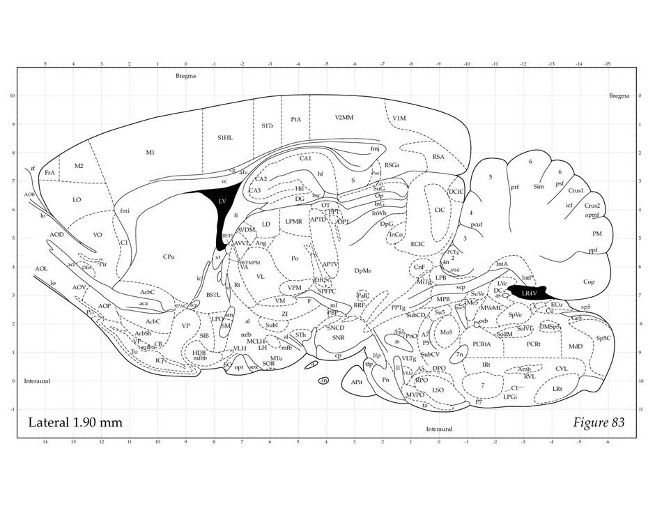 Rat Brain Atlas